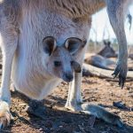 Thrilling Adventures in Western Australia